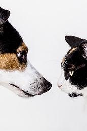 cats-1517642_1920.jpg