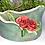 Thumbnail: Sea Green and Rose Luminary and Planter
