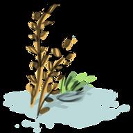 macroalgae, algae, marine biology, seaweed, Brianna Leahy Art, illustration, digital art, scientific illustration, education, learning, Sargassum