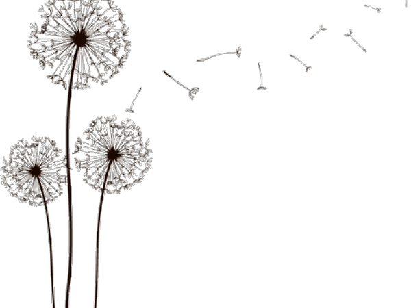 dandelion-clipart-high-resolution-4.png
