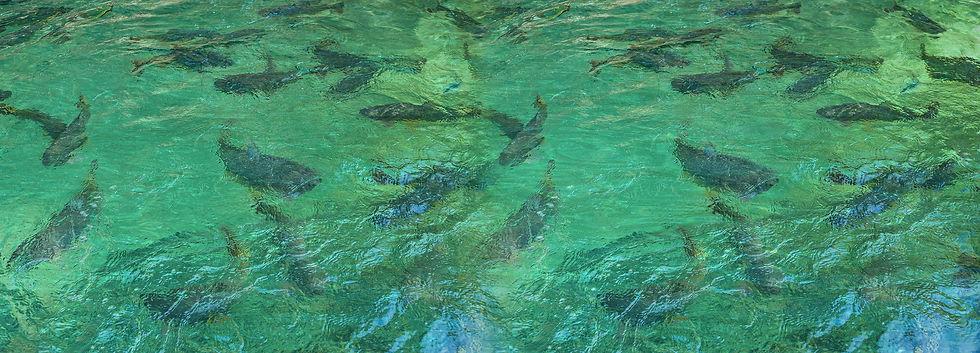 bg_river.jpg