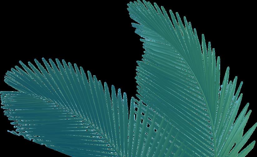 palmeira.png