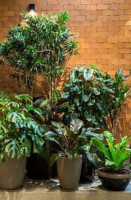 Plant Styling 1.jpg