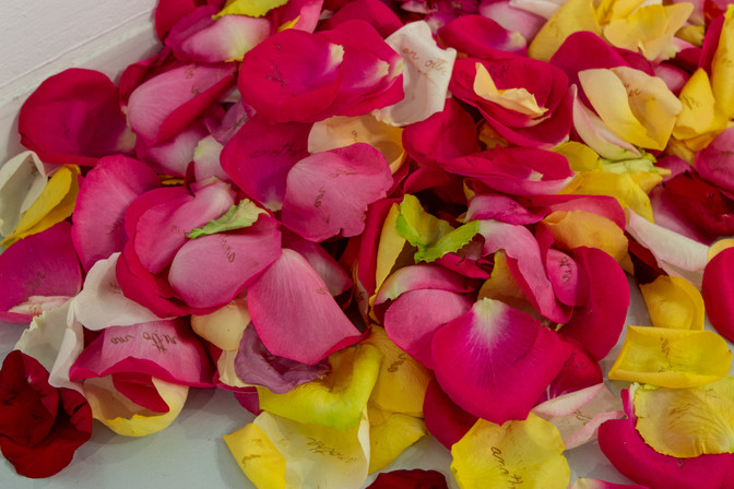 Bruised rose petals 2019