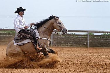 אילוף ואימון סוסים