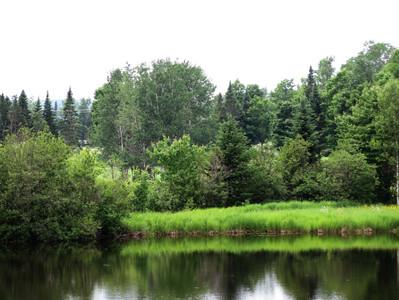 La biodiversité, son manque et les effets dévastateurs