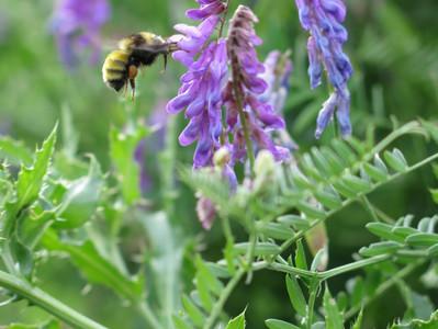 Les insectes utiles au jardin