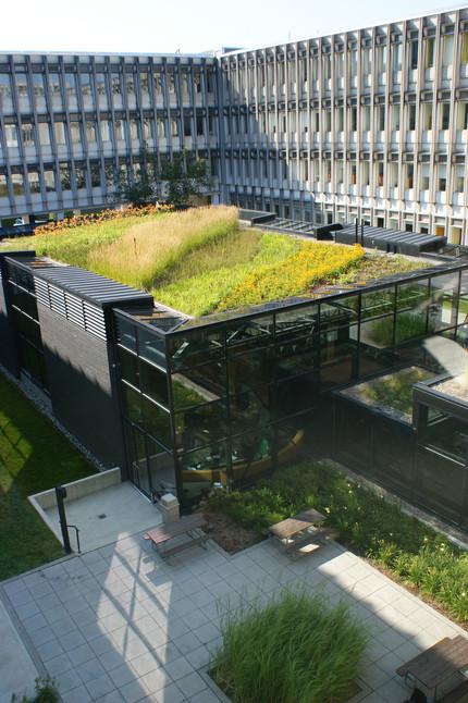 Le toit végétal, une solution