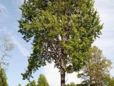 Prendre soin de ses arbres, c'est apprendre à les connaître…