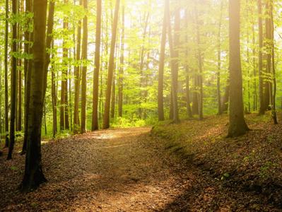 Forêt urbaine, quels enjeux?