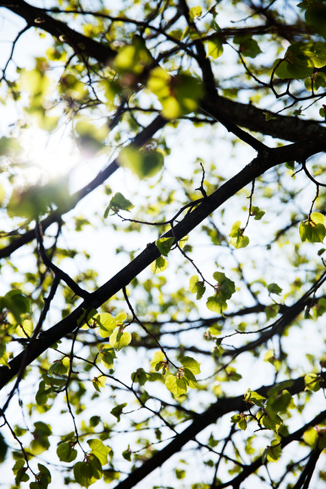 Après l'hiver vient le printemps
