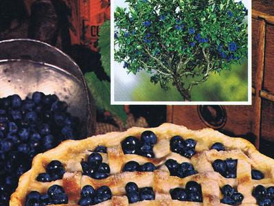 Ces arbustes ornementaux et fruitiers, ma foi, quelle bonne idée!