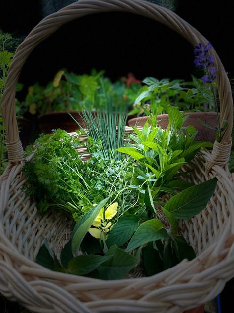 Les herbes aromatiques, faciles à cultiver et délicieuses à déguster