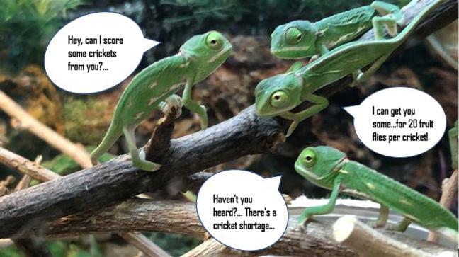 Chameleons Conversing2.jpg