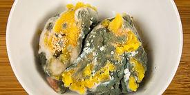moldy food.jpg