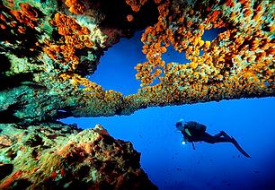 reef blue hole diver.tiff