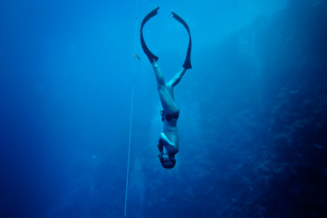 freedive2910.jpg