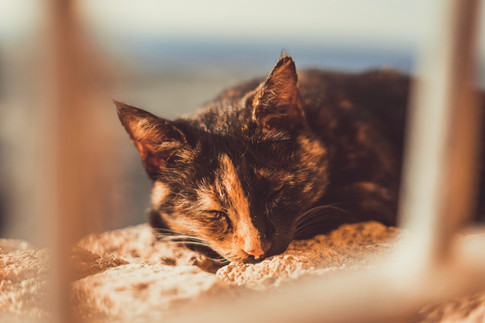 sleeping-cat.jpg