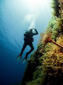 calypso-wall-dive.jpg