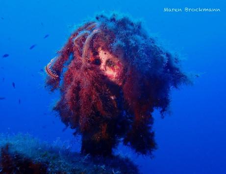 cominoland-wreck-mediterranean.jpg