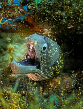 muray-eel.jpg