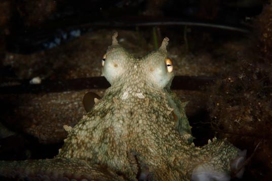 Octopus portrait.JPG