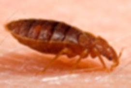 Cerified Pest Control Naples FL Bed Bugs