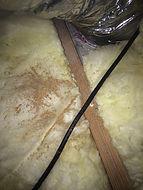 Termite Pellets (Frass)