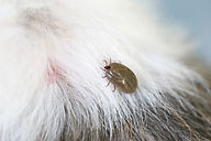Tick and Flea Control in Southwest Florida