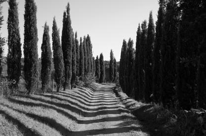 Italy Maremma #01 2015_40x60_Filippo Chi