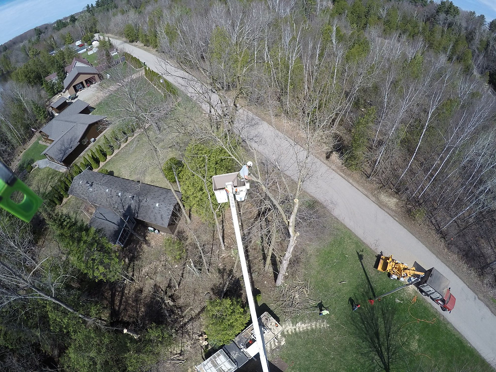 Oconto Falls Wisconsin Tree Removal Project Arial view