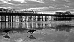 Pier Dogs 1