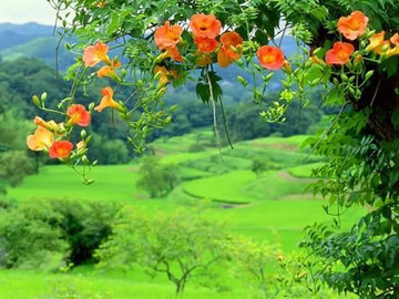 Never ending beauty in our magical Southern Zone of Costa Rica