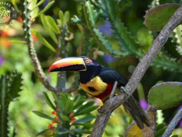 Beauty in our Extremely Diverse Southern Zone of Costa Rica