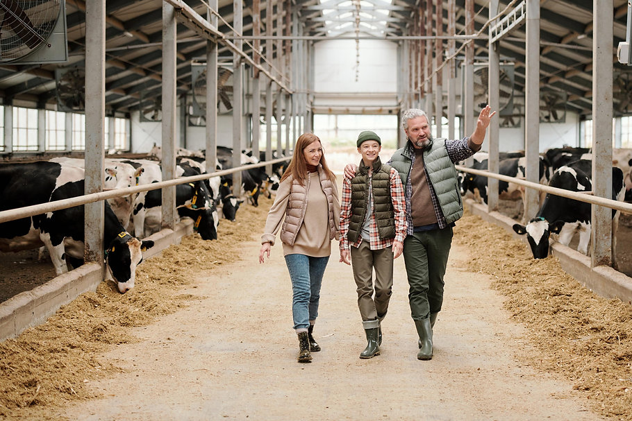 Two parents walking happily their son through a stall barn of cows.