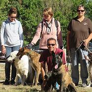 Éducation canine - Leçon collective