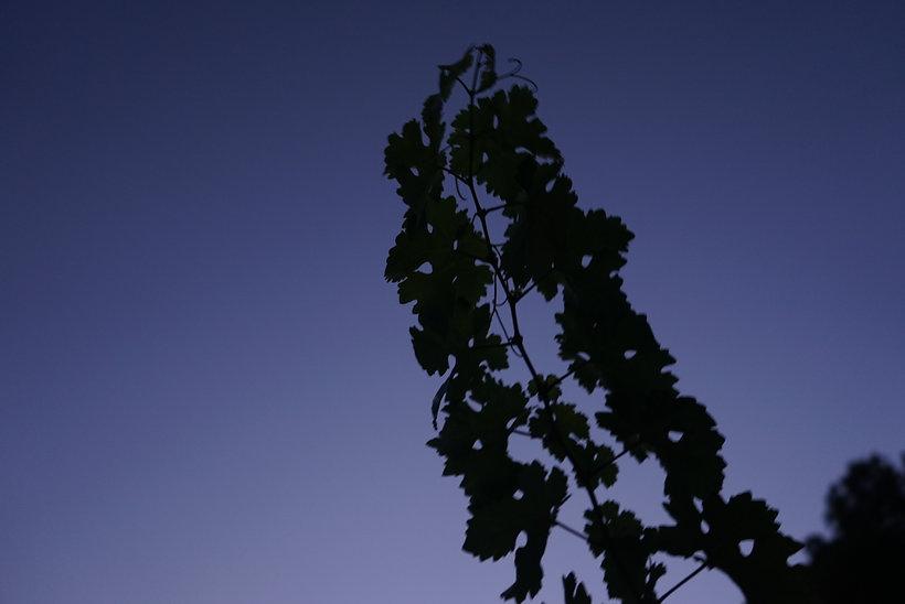 monte odina vid hojas
