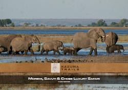 Moremi, Savuti & Chobe-7 Days