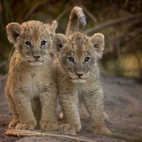 1. Wildlife