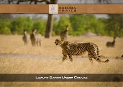 Luxury Safari MO