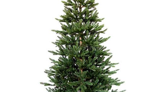 G3Q6046J  180cm PE Christmas Tree