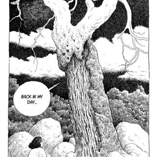 Old tree, good advice_