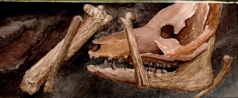 stonehenge pig bones.jpg