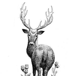 deer.tif