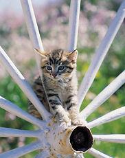 Dayton Ohio Cat sitting