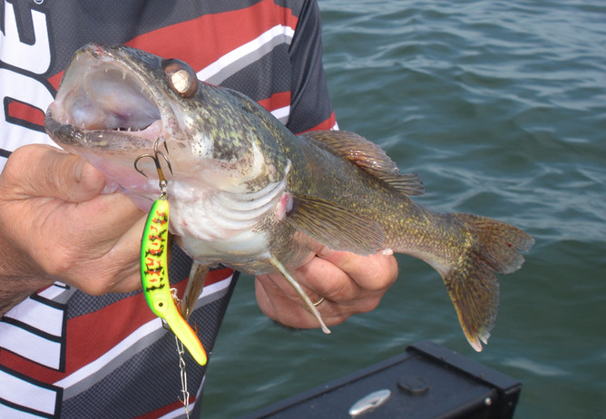 Wiggle Your Way To More Walleye