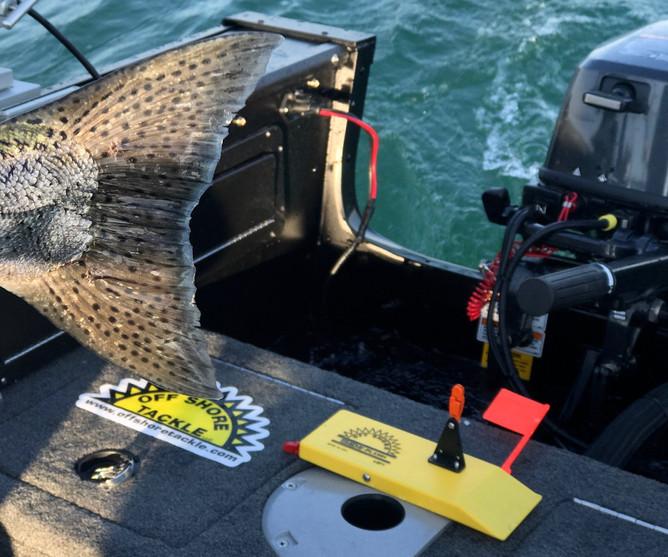 Board Fishing For Salmon