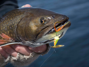 """Fishing the Rooster Tail® Spinner the """"Countdown Method"""""""