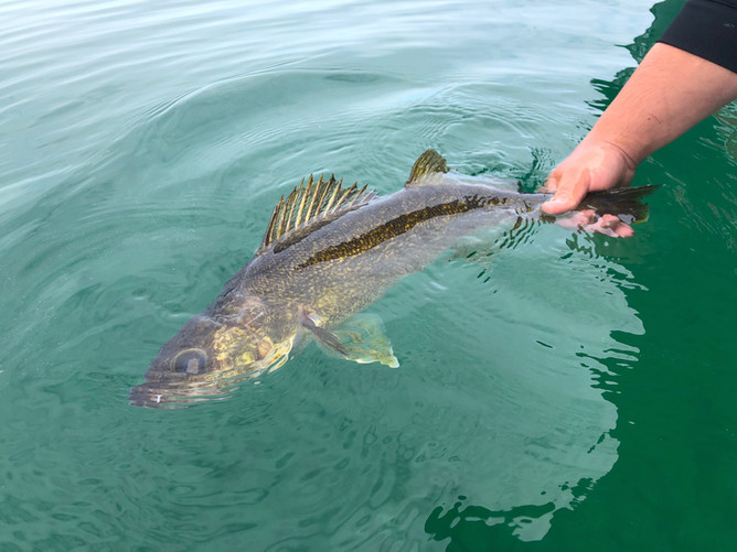 Ultra Clear Water Structure Fishing