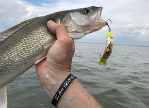 Walleye and the High Action Plug Bite
